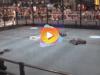 competencia robot