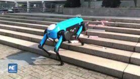 Surgen en China robots de cuatro patas que corren, suben y bajan escaleras.